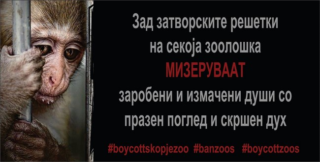 banzoos (Copy)